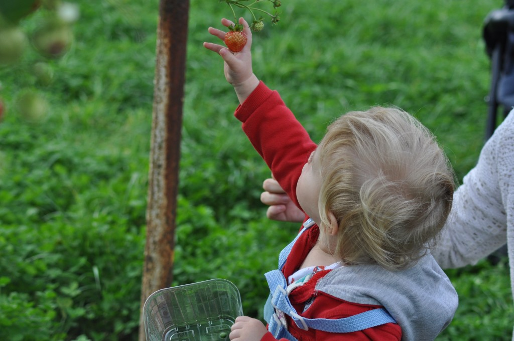 How early years practitioners can teach children where food comes from