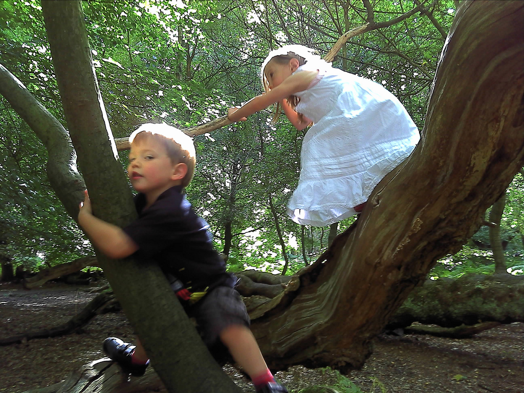Climbing trees learning about risky play