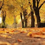 Top 5 autumn leaf activities